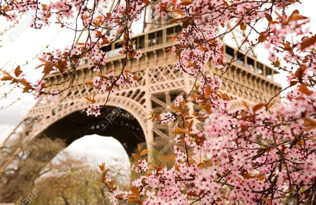 10431806-Spring-in-Paris-Bloomy-cherry-tree-and-the-Eiffel-Tower-Focus-on-flowers-Stock-Photo