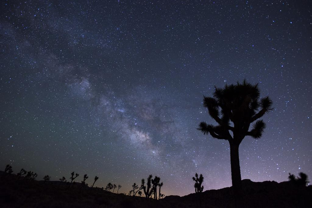 Joshua Tree National Park Night Palm Springs Road Trips the Art of Travel