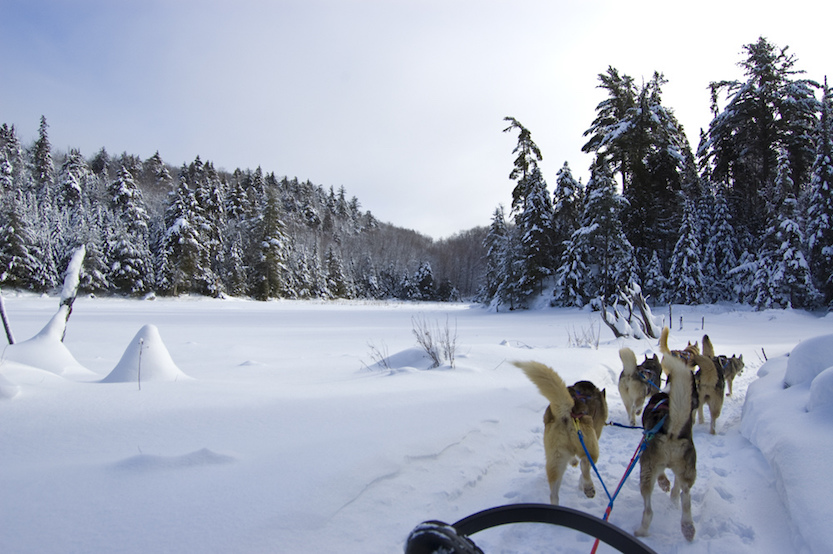 Travel Bucket List The Art of Travel Dog sledding