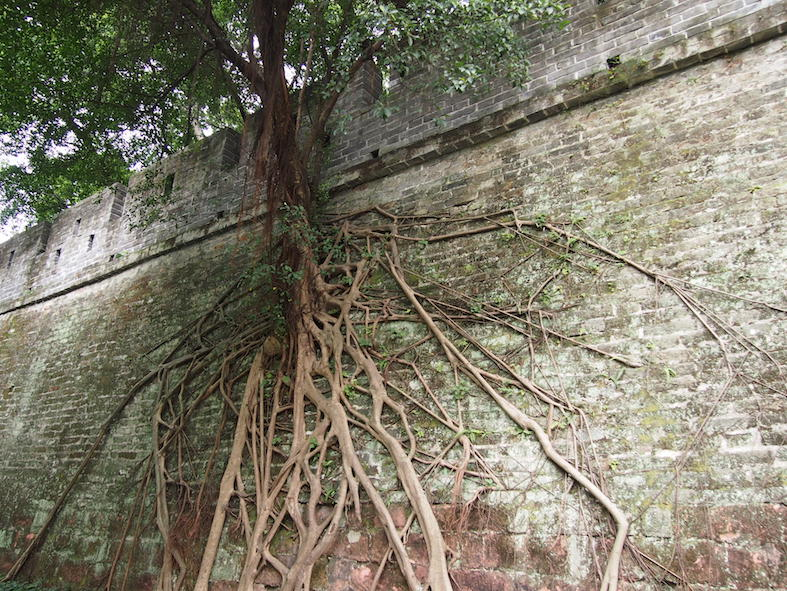Guangzhou City Guide The Art of Travel Yuexiu Park Ming Dynasty Wall Tree