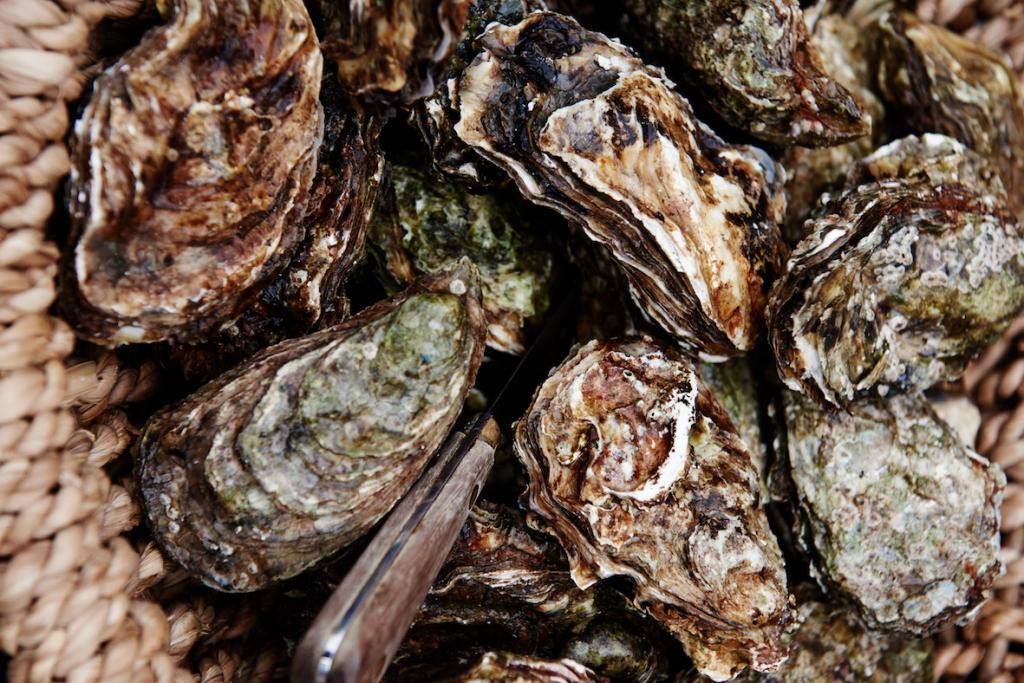 Travel guide to South West Denmark The Art of Travel Oyster Safari Wadden Sea Oysters