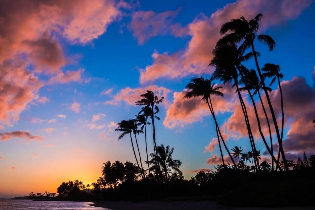 World Traveller Nazanin Rose Matin The Art of Travel Hawaii beach sunset