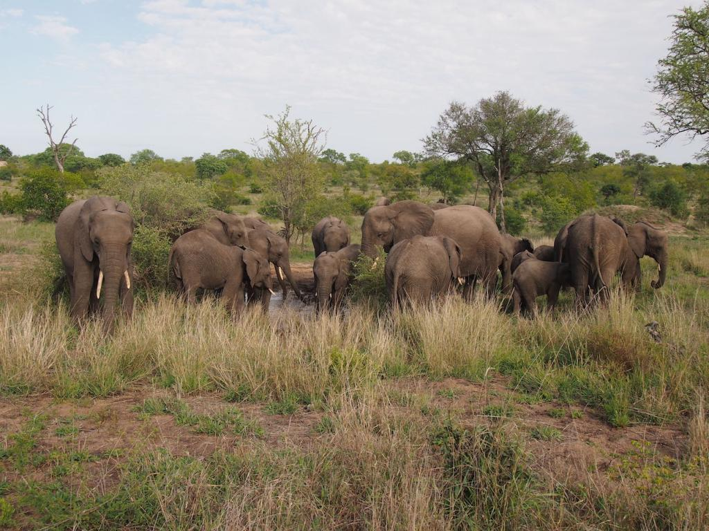 Safari in a private game reserve in South Africa The Art of Travel The Big Five elephants morning bathing