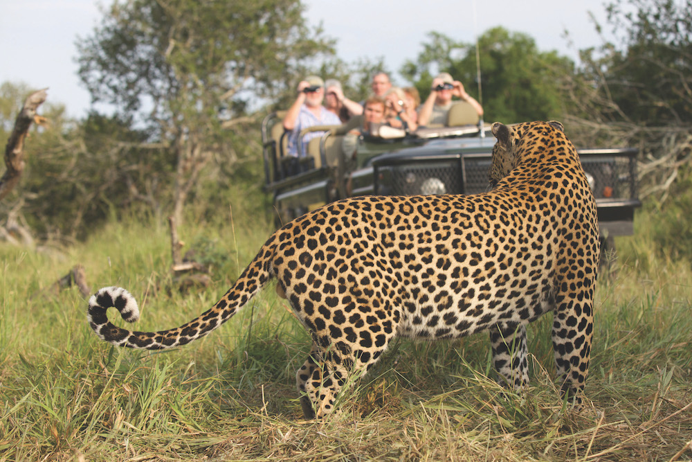 Safari in a private game reserve in South Africa The Art of Travel The Big Five Leopard