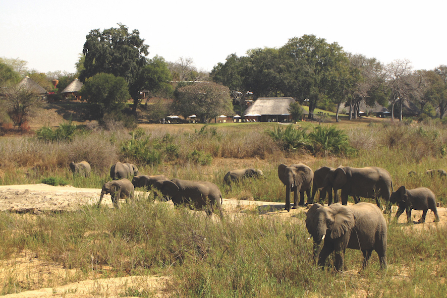 Safari in a private game reserve in South Africa The Art of Travel The Big Five Mala Mala elephants