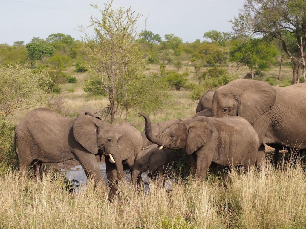Safari in a private game reserve in South Africa The Art of Travel The Big Five elephants bathing