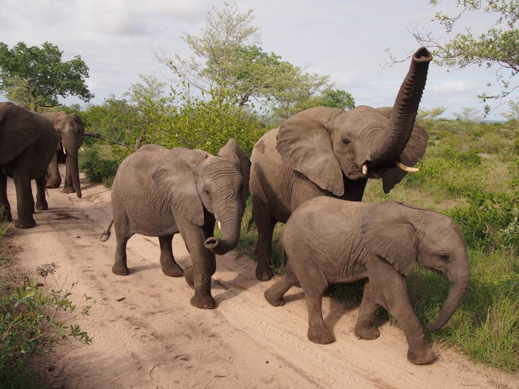 Safari in a private game reserve in South Africa The Art of Travel The Big Five elephants trunk