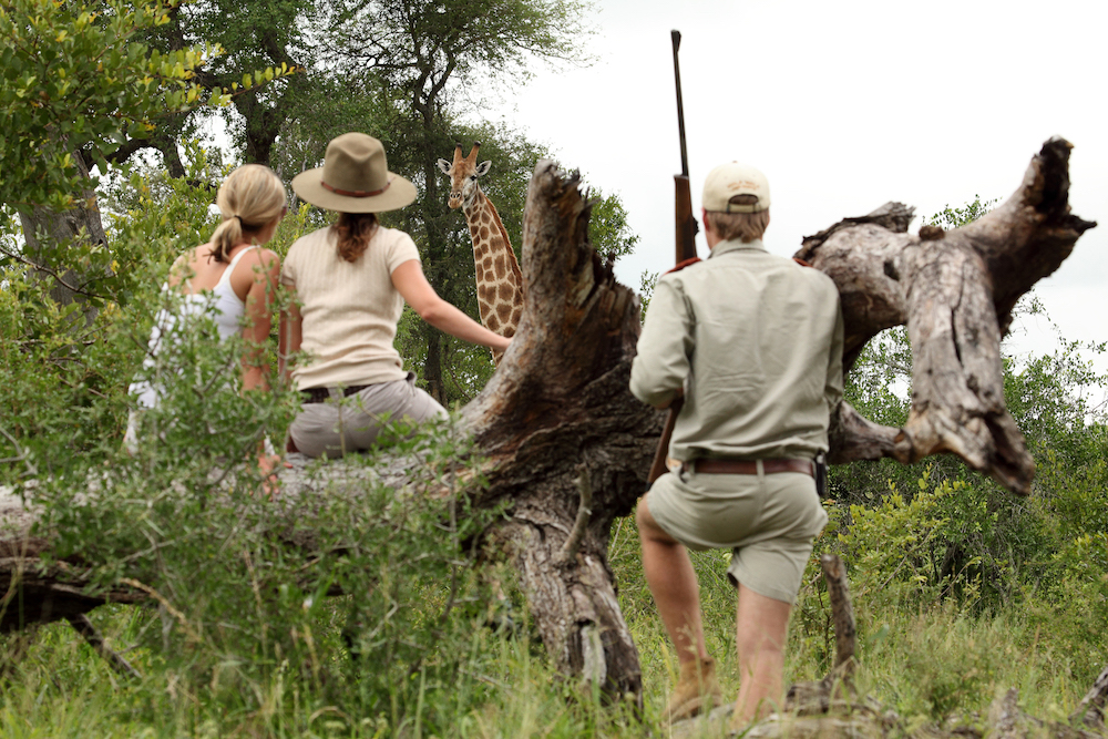 Safari in a private game reserve in South Africa The Art of Travel The Big Five giraffe
