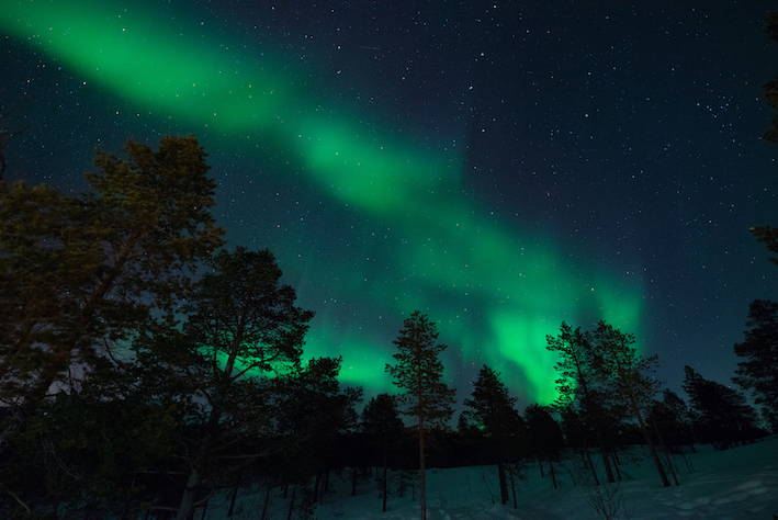 Travel guide to Tromsø in Norway The Art of Travel Northern Lights forest