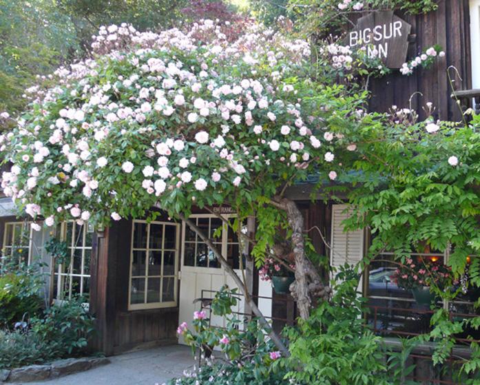Five restaurants in Big Sur The Art of Travel Deetjen's Big Sur Inn