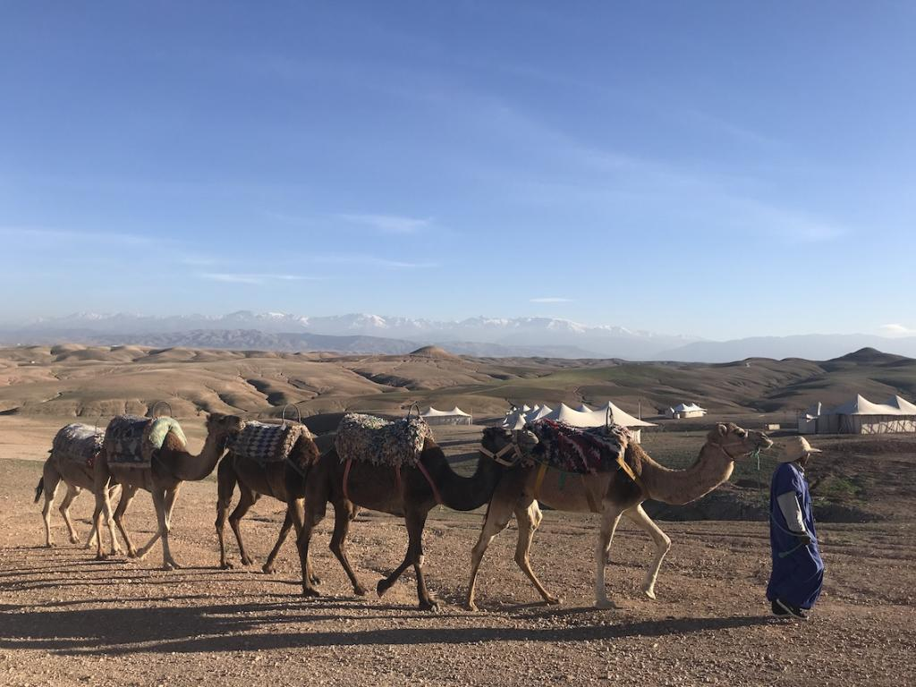 The bedouin camp close to Marrakech in Morocco The Art of Travel Scarabeo Camp Desert camels
