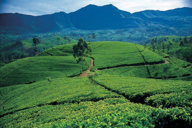 Why you should visit the highlands of Sri Lanka  The Art of Travel Hill Country Rolling Tea Estates