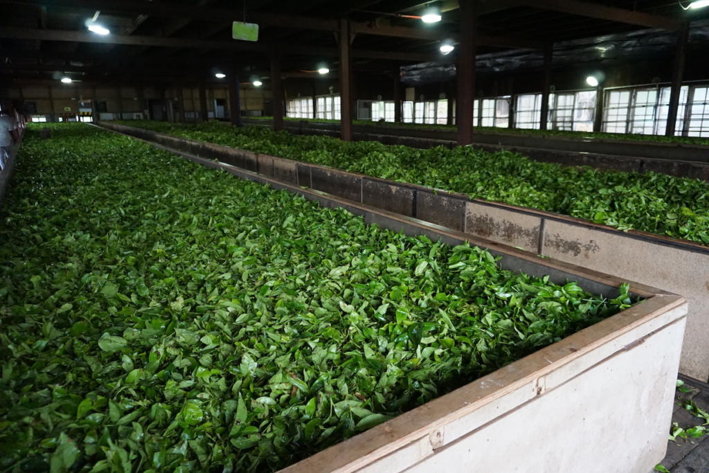 Why you should visit the highlands of Sri Lanka The Art of Travel tea leaves drying